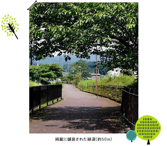 綺麗に舗装された緑道(約50m)